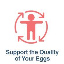 egg quality fertility pills supplements clomiphene for women female fertility booster egg health