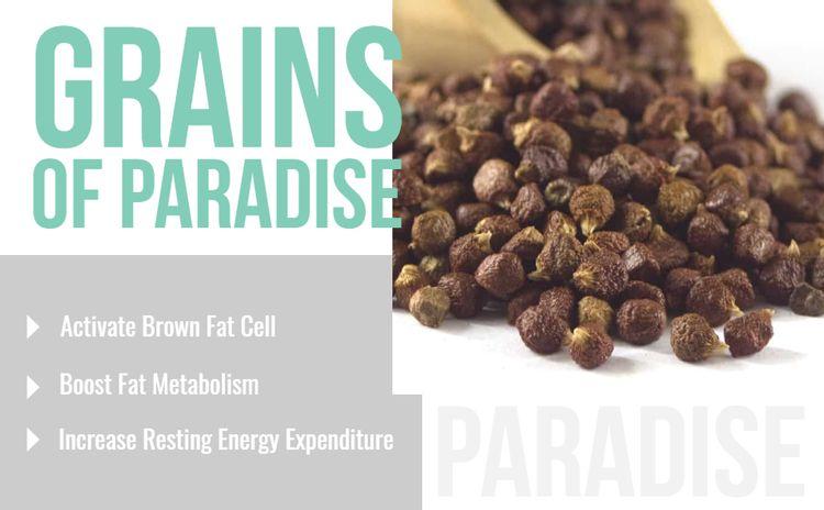 grains of paradise metabolism boost keto ketone green coffee bean raspberry ketone brown fat cell