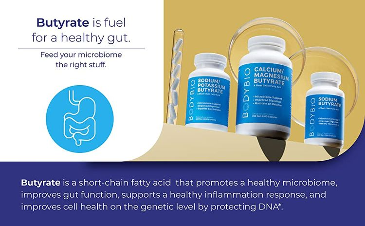 butyrate microbiome healthy gut short chain fatty acid scfa cell health gut function inflammation