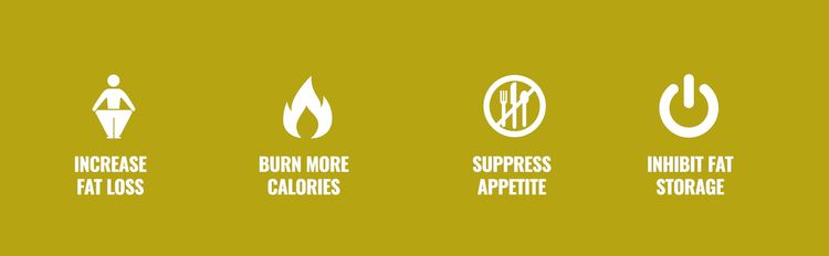 Increase Fat Loss, Burn More Calories, Suppress Appetite, and Inhibit Fat Storage