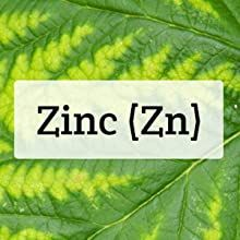zinc capsule pills supplements vitamins for adults 50mg 50 30mg lozenge losenge picolinate oxide