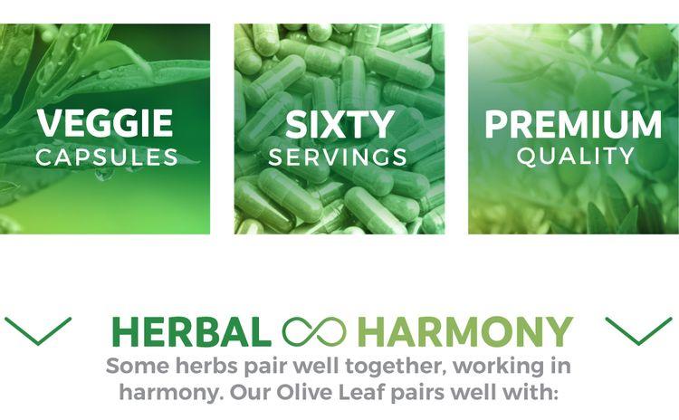 62 / 5000 Translation results Vegetarian Olive Leaf Extract, Vegan, Premium Quality