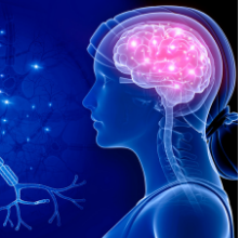 Zinc Supports Healthy Nervous System