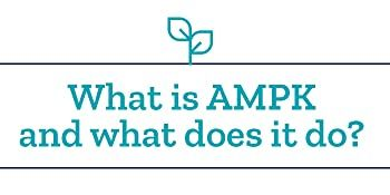 What is AMPK
