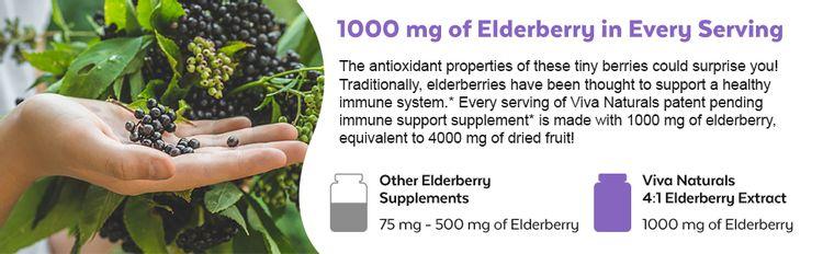 viva naturals 1000mg elderberry extract immune support