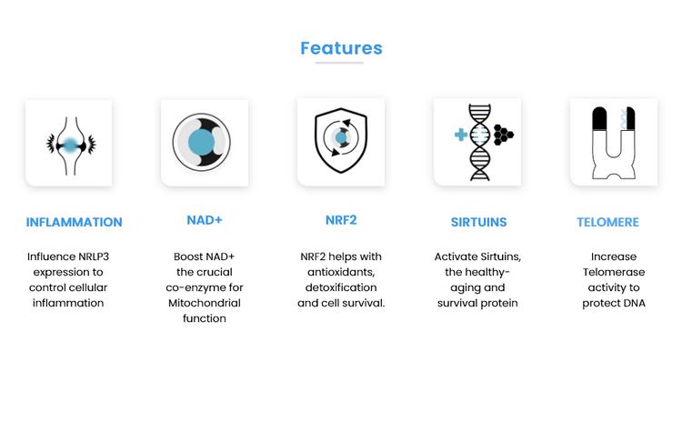 NAD+ Sirtuins Telomere Inflammation